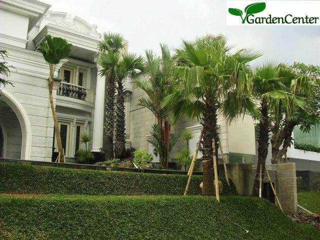 Taman Klasik - jasa tukang taman surabaya