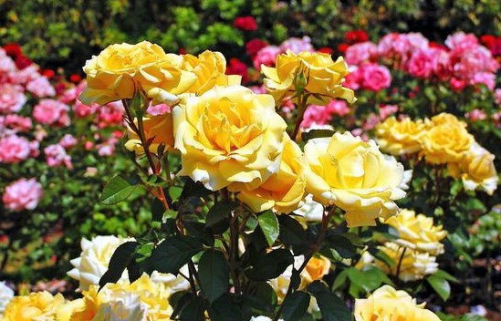 Simak 5 Cara Merawat Bunga Agar Tumbuh Merekah Garden Center
