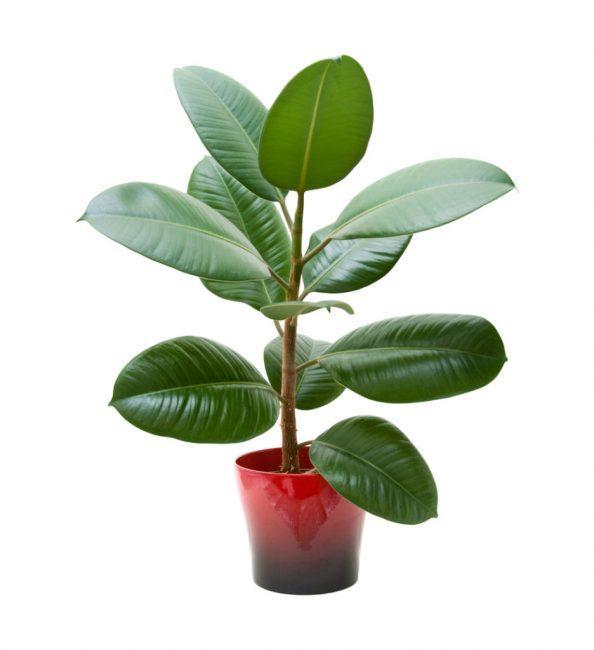 Plant - 662×724