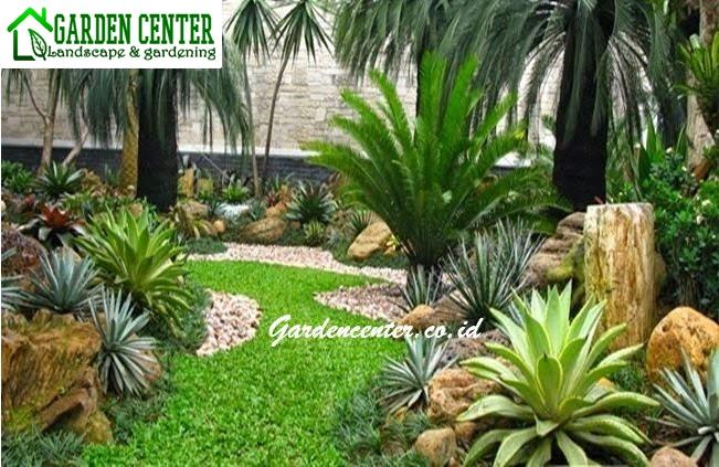 taman kering encephalartos