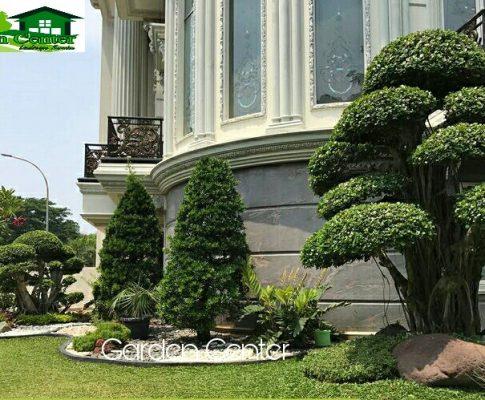 Jasa Perawatan Taman Profesional di Jakarta