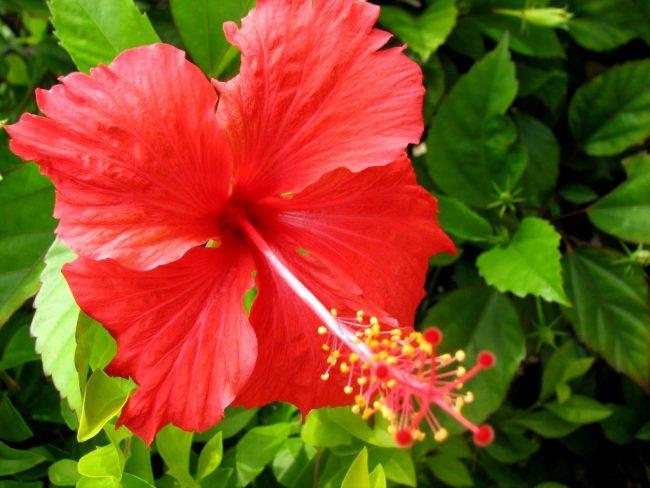 Bagian Dan Fungsi Bunga Pada Tumbuhan