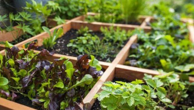 Desain Kebun / Taman Sayuran Yang Cantik & Unik