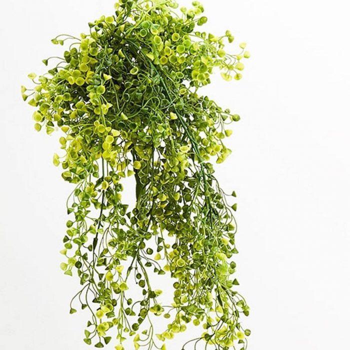 tanaman hias cantik