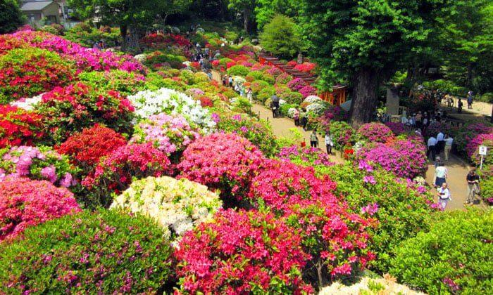 jenis tanaman hias untuk taman minimalis