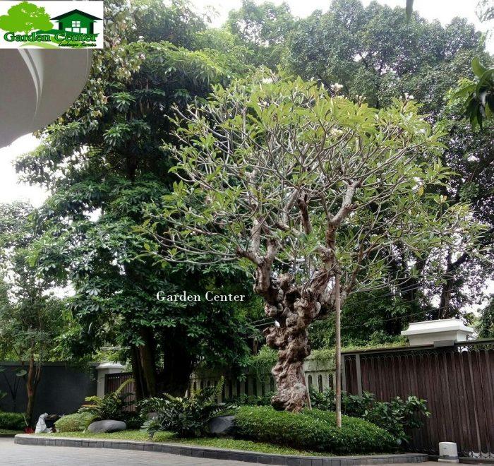 Tukang Taman Cirebon Jasa Pembuatan Taman Cirebon